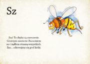 zooalfabet26